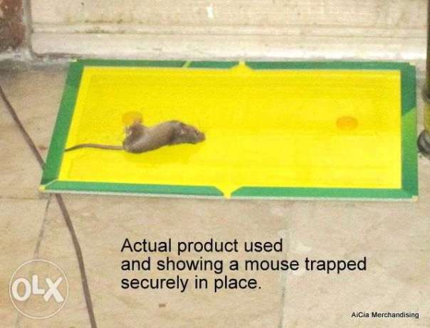 Super Glue Rat Mouse Board Trap