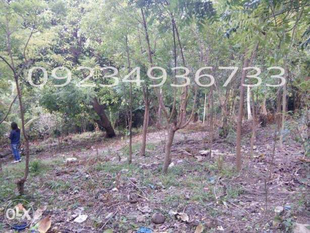 Commercial and Residential Subdivided lot for Sale